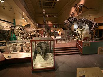 Photo courtesy Donald E. Hurlbert / Smithsonian Institution.