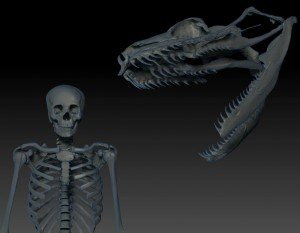 A Boa constrictor skull is scaled up to the same size as Titanoboa and compared to a human skeleton using 3-D tech in the IVL. Render courtesy of Jesse Pruitt.