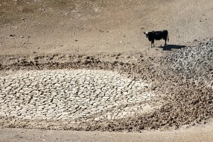 Drought damage on Walnut Creek Ranch in CA in 2014. USDA photo by Cynthia Mendoza.