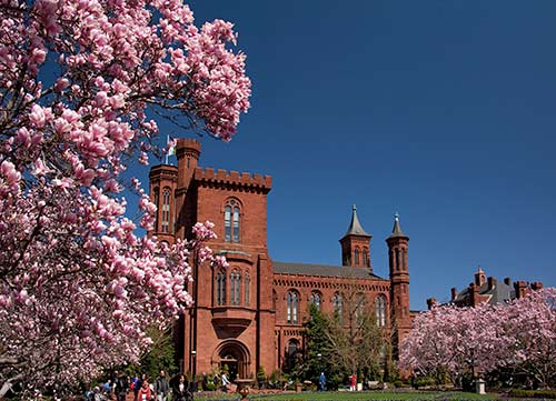 Pink cherry blossoms frame the Smithsonian Castle under a bright blue sky.