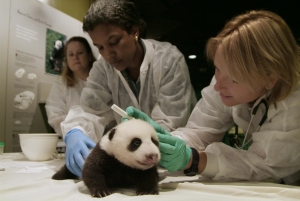 Smithsonian Zoo researchers with a baby panda.
