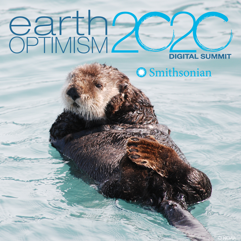 Earth Optimism 2020 logo featuring an otter on its back floating in water.