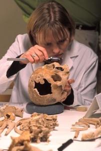 A scientist examines a skull.