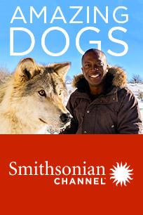 Amazing Dogs-Man's Best Friend